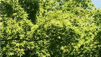 botanicgarden2015-02.JPG