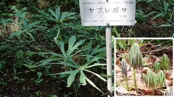 botanicgarden2015-04.JPG