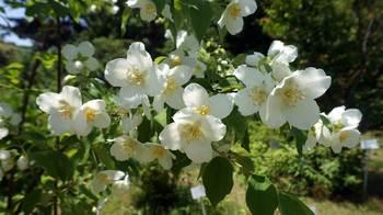 botanicgarden2015-05.JPG