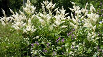 botanicgarden2015-06.JPG