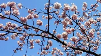 early spring-02.JPG