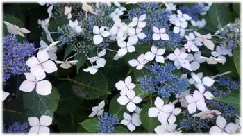 flowers in rainy season 02.JPG
