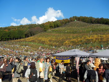 vineyard 06.JPG